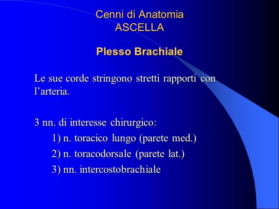 Cenni di Anatomia ASCELLA Plesso Brachiale