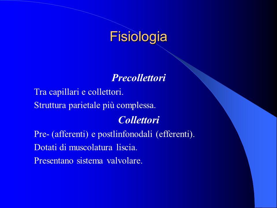 Fisiologia Precollettori Collettori Tra capillari e collettori.