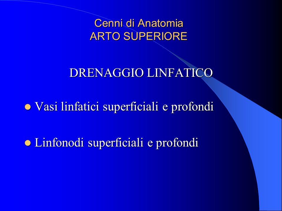 Cenni di Anatomia ARTO SUPERIORE