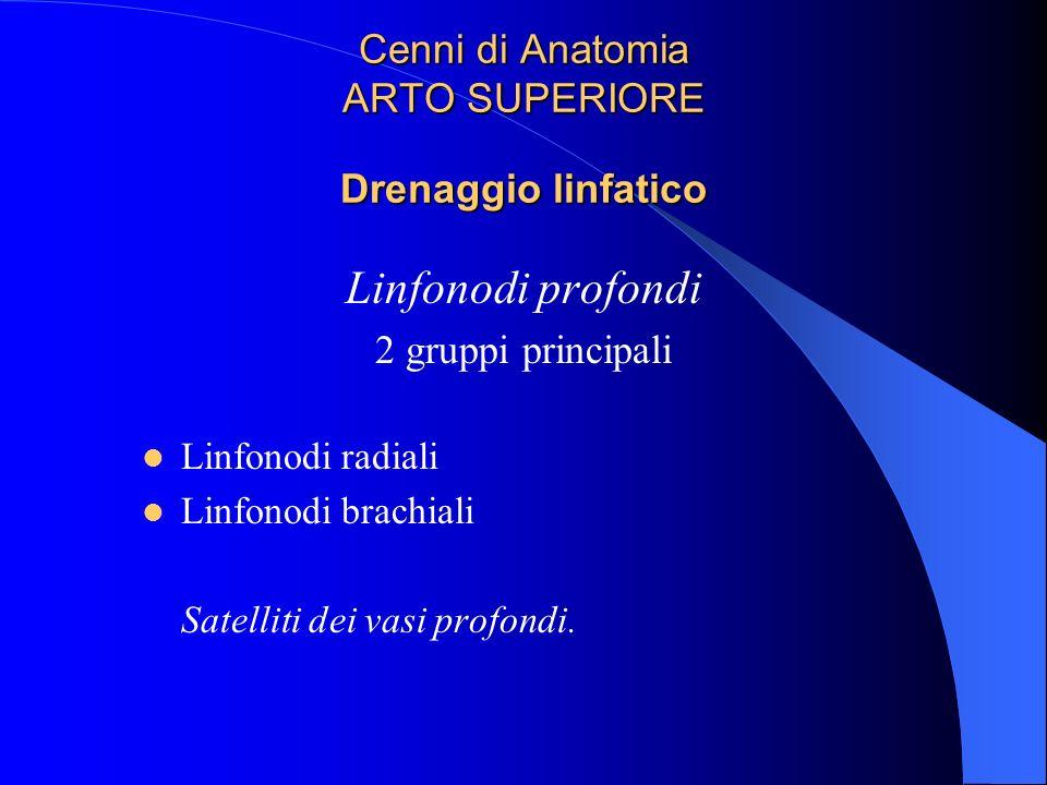 Cenni di Anatomia ARTO SUPERIORE Drenaggio linfatico