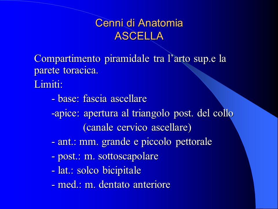 Cenni di Anatomia ASCELLA