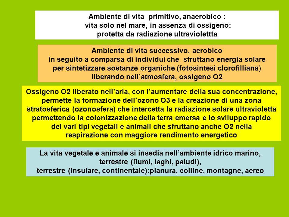Ambiente di vita primitivo, anaerobico : vita solo nel mare, in assenza di ossigeno; protetta da radiazione ultraviolettta