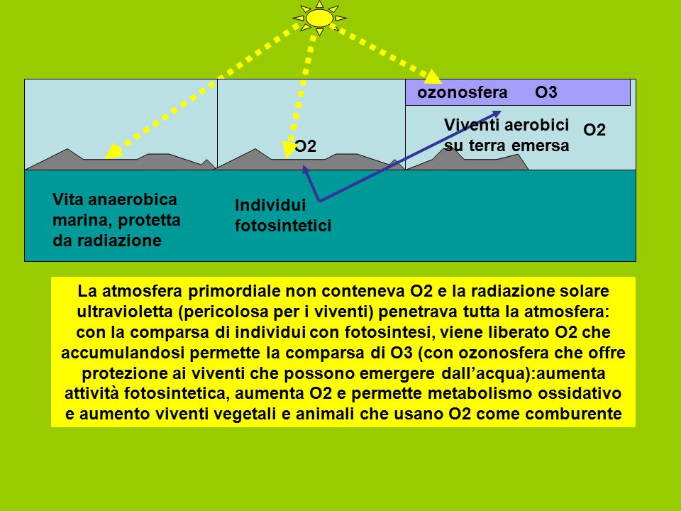 ozonosfera O3. Viventi aerobici su terra emersa. O2. O2. Vita anaerobica marina, protetta da radiazione.