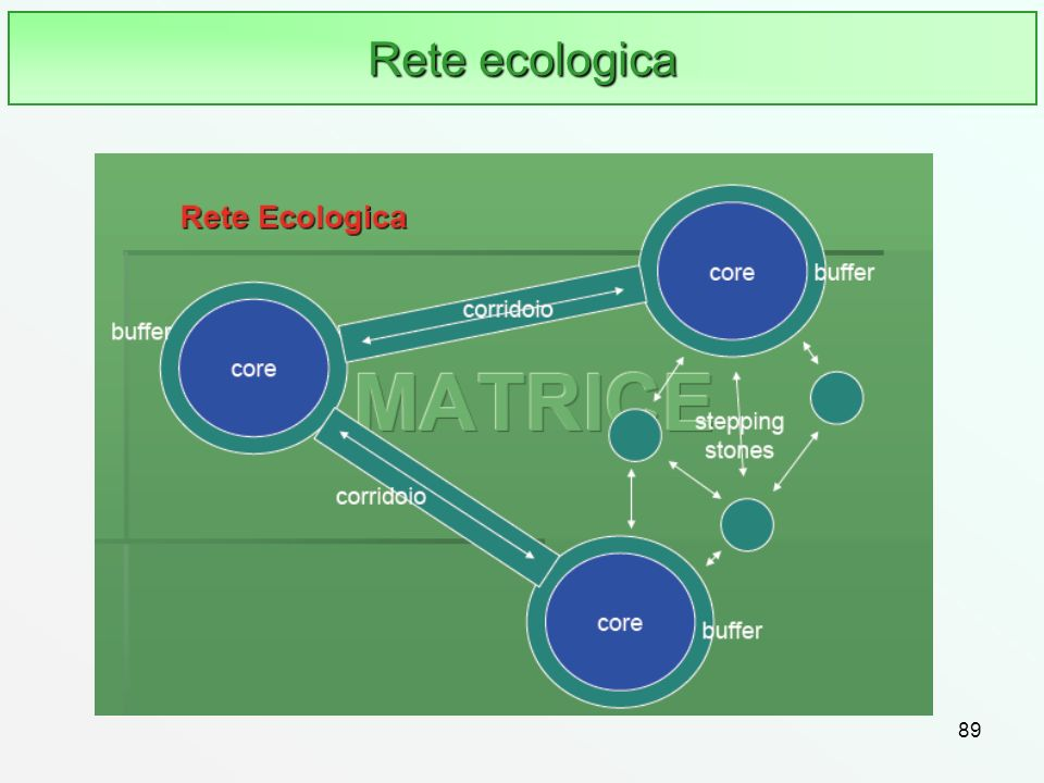Rete ecologica 89