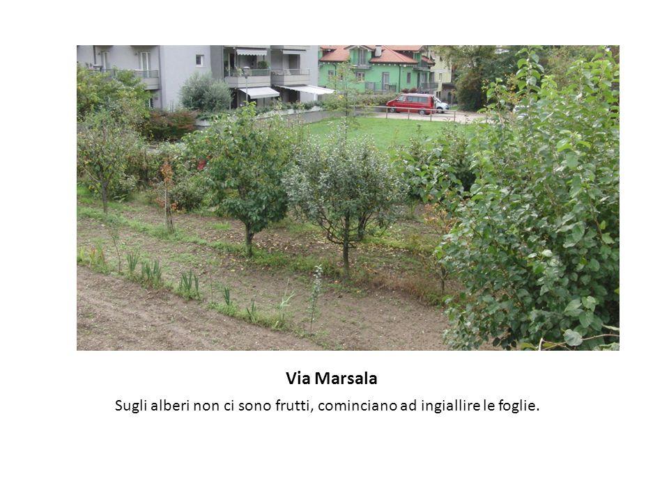 Via Marsala Sugli alberi non ci sono frutti, cominciano ad ingiallire le foglie.