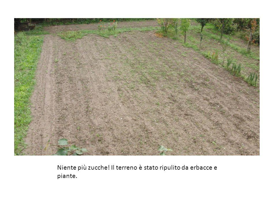 Niente più zucche! Il terreno è stato ripulito da erbacce e piante.