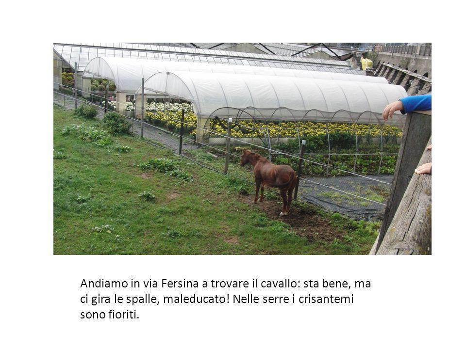 Andiamo in via Fersina a trovare il cavallo: sta bene, ma ci gira le spalle, maleducato.