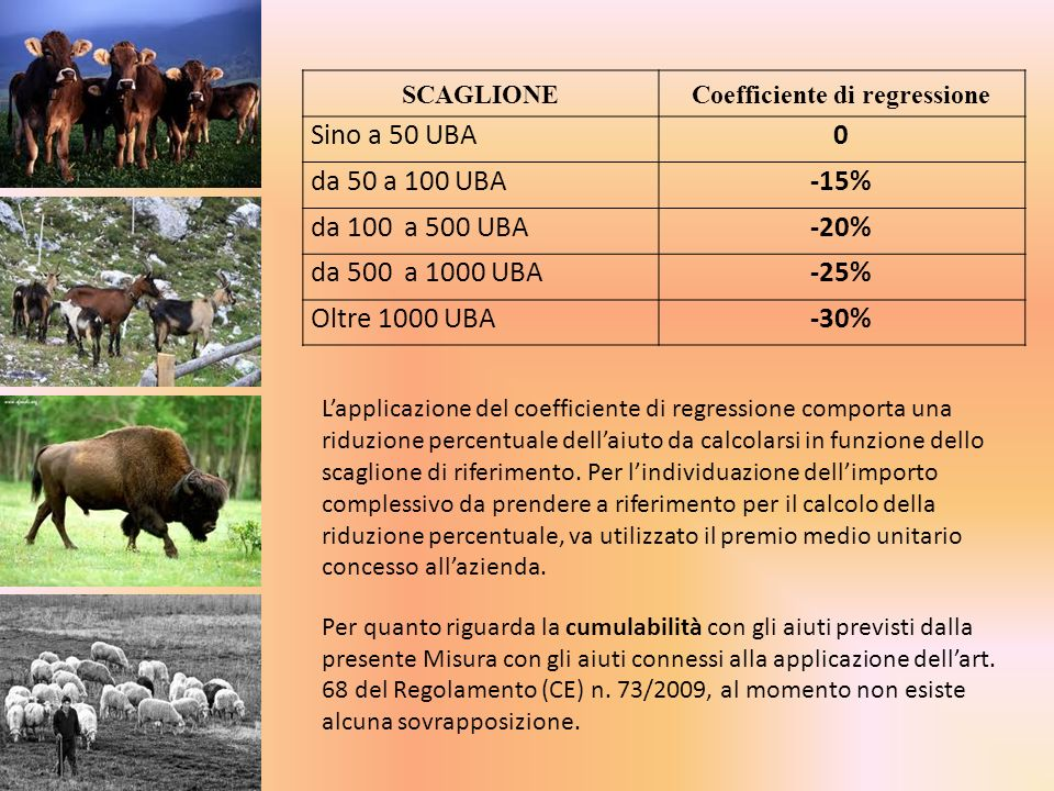 Coefficiente di regressione