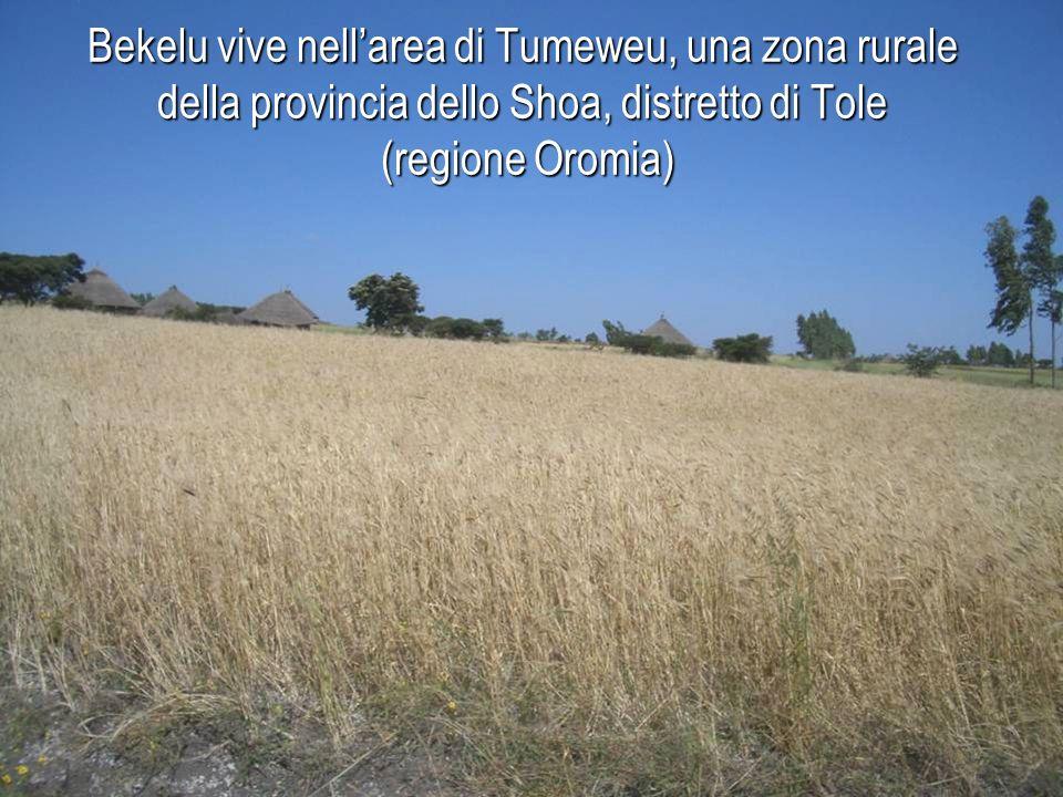 Bekelu vive nell'area di Tumeweu, una zona rurale della provincia dello Shoa, distretto di Tole (regione Oromia)