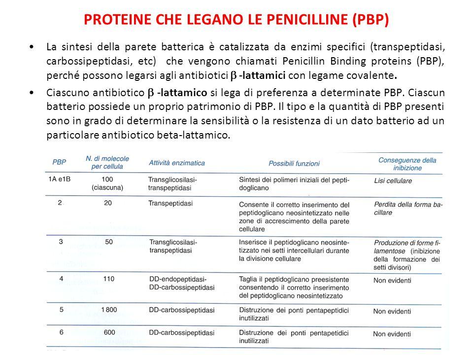 Proteine che legano le penicilline (PBP)