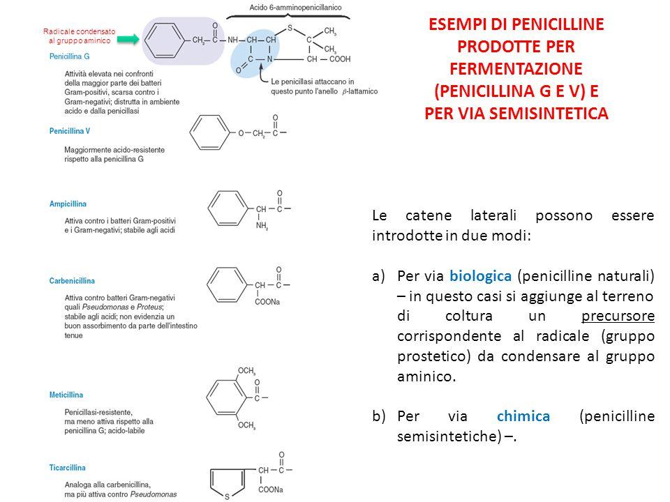 Radicale condensato al gruppo aminico