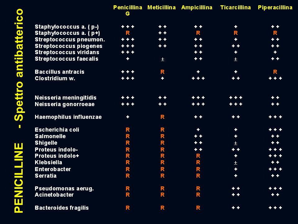 PENICILLINE - Spettro antibatterico