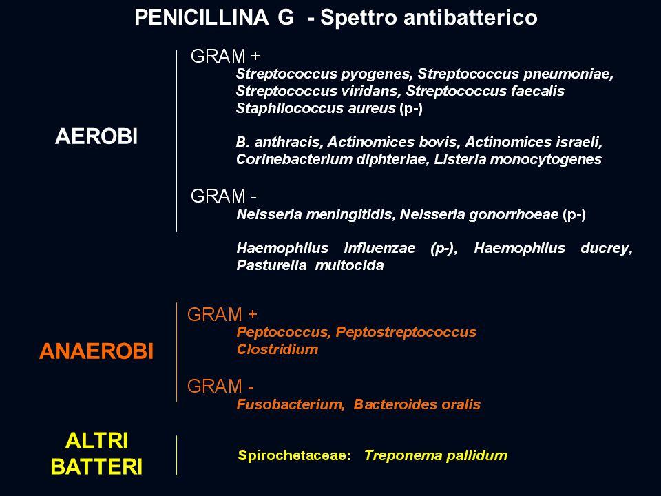 PENICILLINA G - Spettro antibatterico