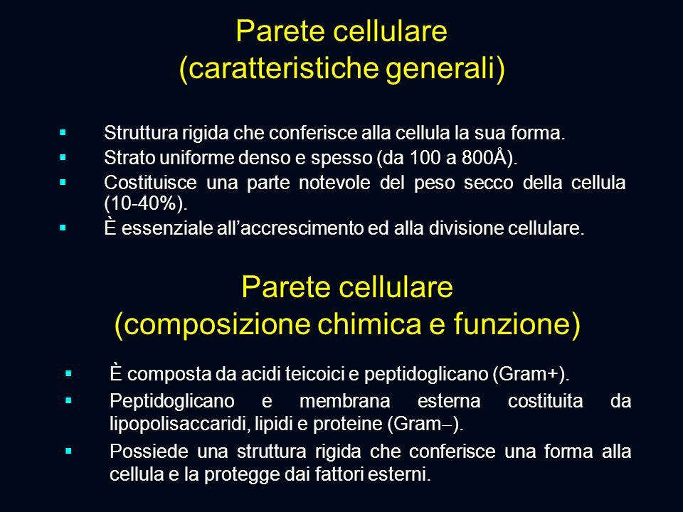 Parete cellulare (composizione chimica e funzione)