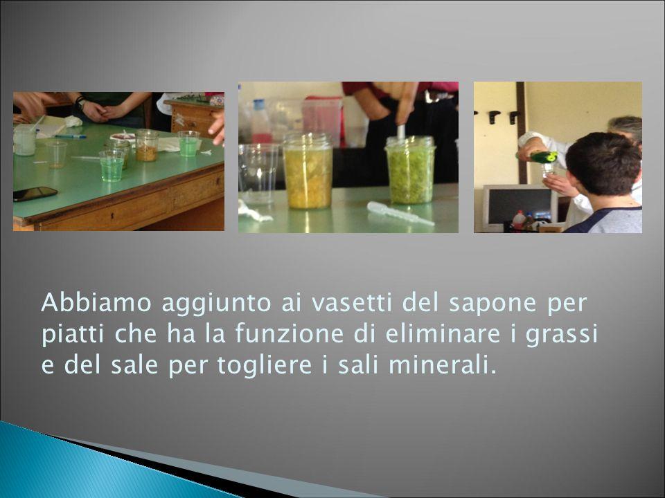 Abbiamo aggiunto ai vasetti del sapone per piatti che ha la funzione di eliminare i grassi e del sale per togliere i sali minerali.