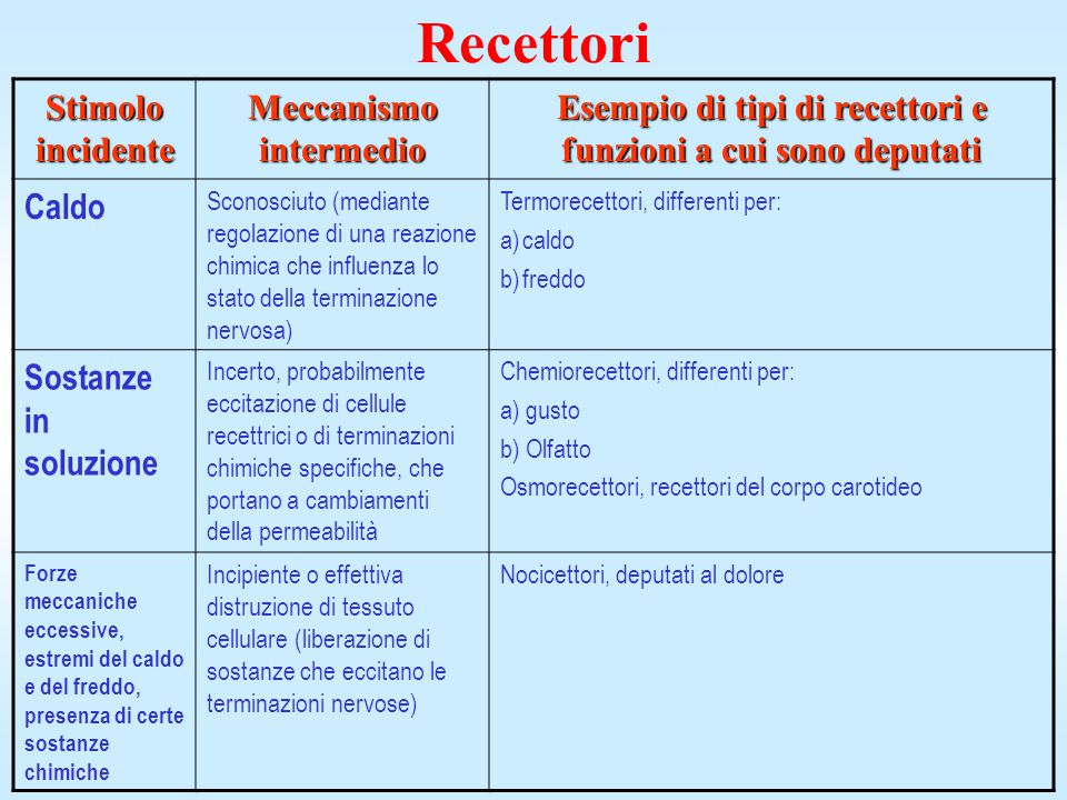 Recettori Stimolo incidente Meccanismo intermedio