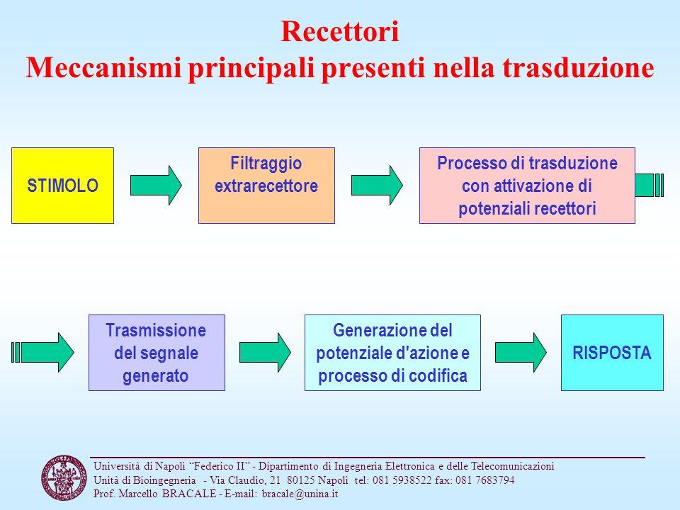 Recettori Meccanismi principali presenti nella trasduzione