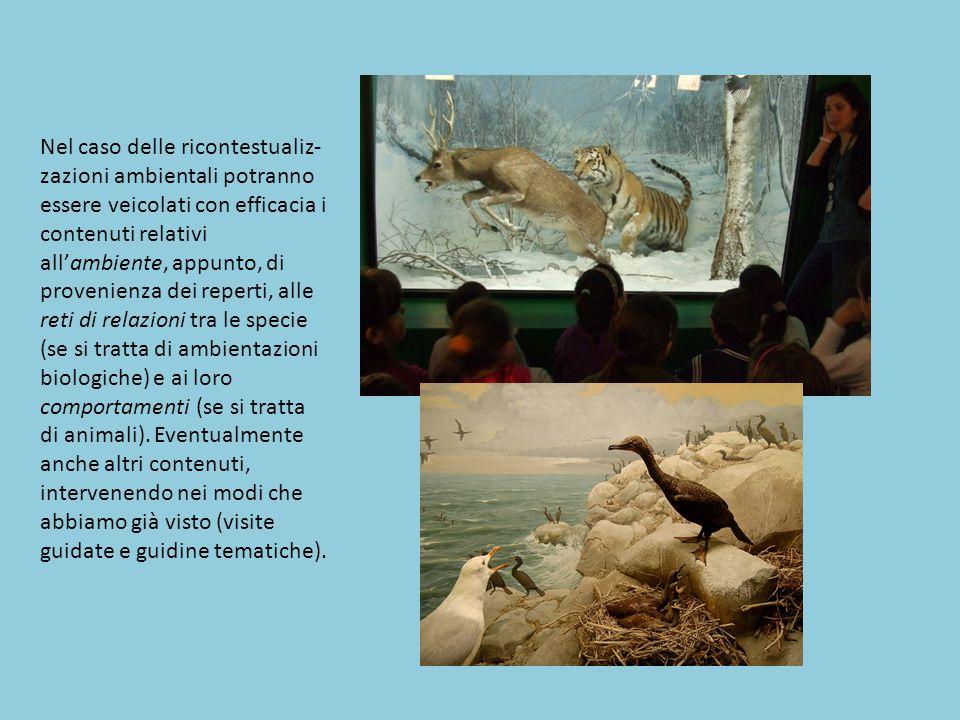Nel caso delle ricontestualiz-zazioni ambientali potranno essere veicolati con efficacia i contenuti relativi all'ambiente, appunto, di provenienza dei reperti, alle reti di relazioni tra le specie (se si tratta di ambientazioni biologiche) e ai loro comportamenti (se si tratta
