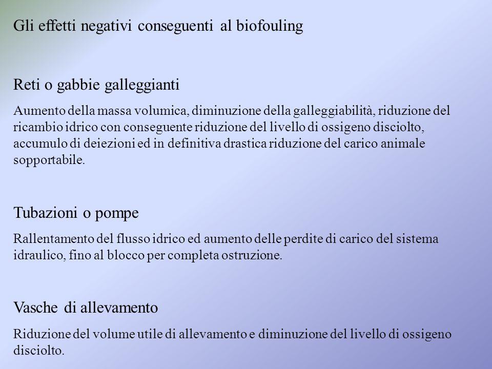 Gli effetti negativi conseguenti al biofouling