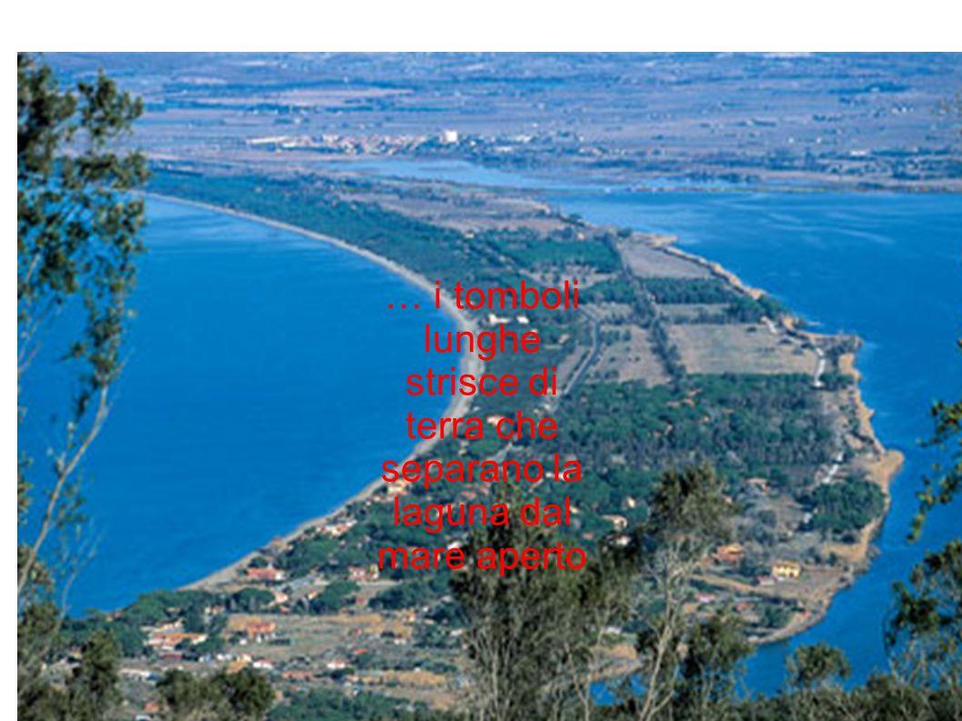 lunghe strisce di terra che separano la laguna dal mare aperto