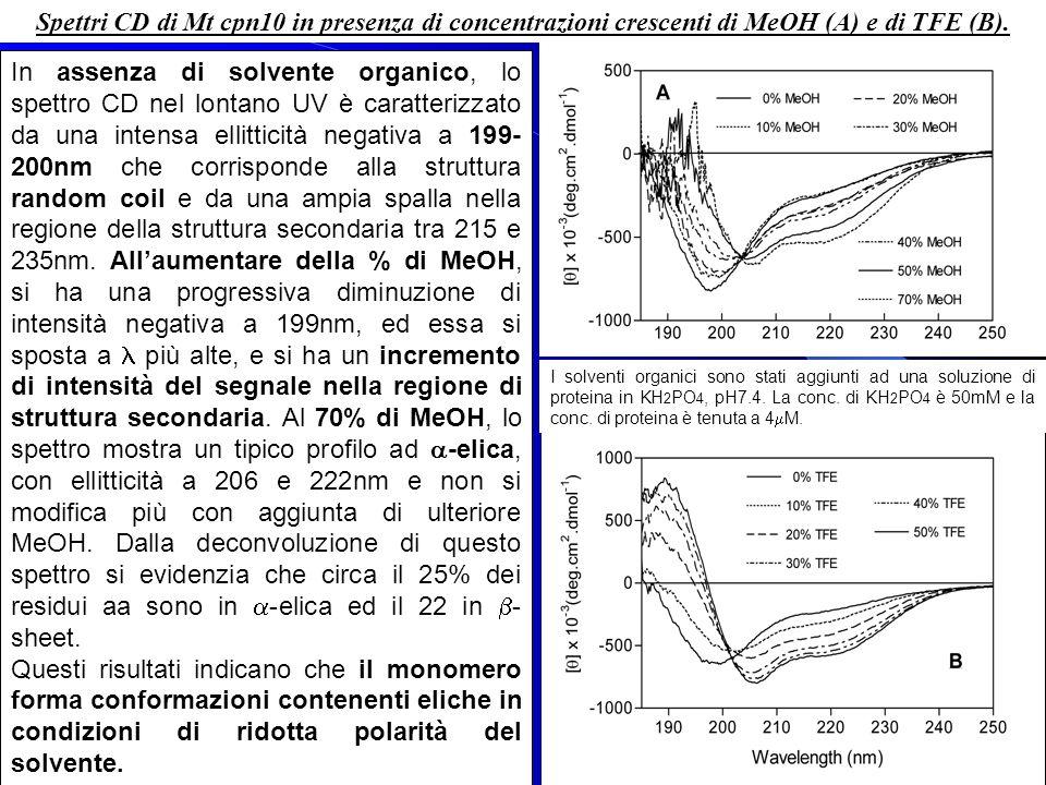 Spettri CD di Mt cpn10 in presenza di concentrazioni crescenti di MeOH (A) e di TFE (B).