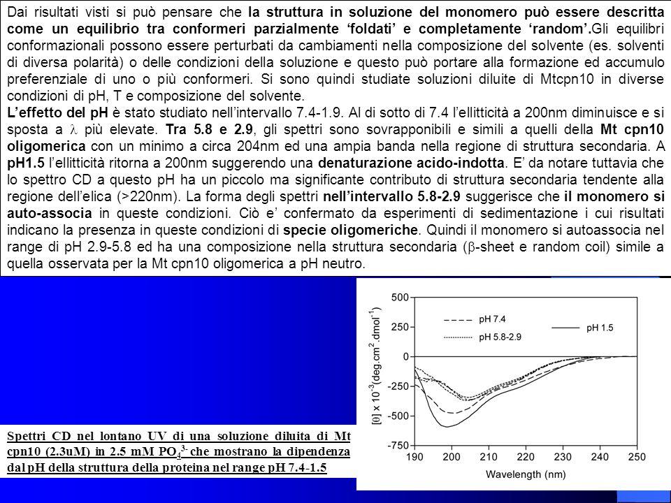 Dai risultati visti si può pensare che la struttura in soluzione del monomero può essere descritta come un equilibrio tra conformeri parzialmente 'foldati' e completamente 'random'.Gli equilibri conformazionali possono essere perturbati da cambiamenti nella composizione del solvente (es. solventi di diversa polarità) o delle condizioni della soluzione e questo può portare alla formazione ed accumulo preferenziale di uno o più conformeri. Si sono quindi studiate soluzioni diluite di Mtcpn10 in diverse condizioni di pH, T e composizione del solvente.