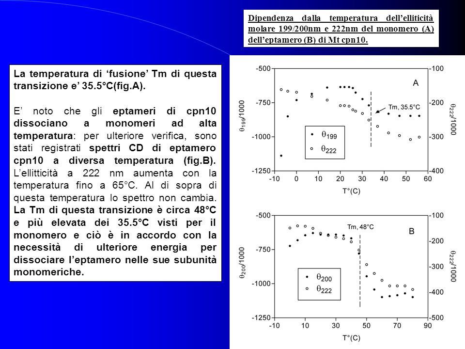 La temperatura di 'fusione' Tm di questa transizione e' 35.5°C(fig.A).
