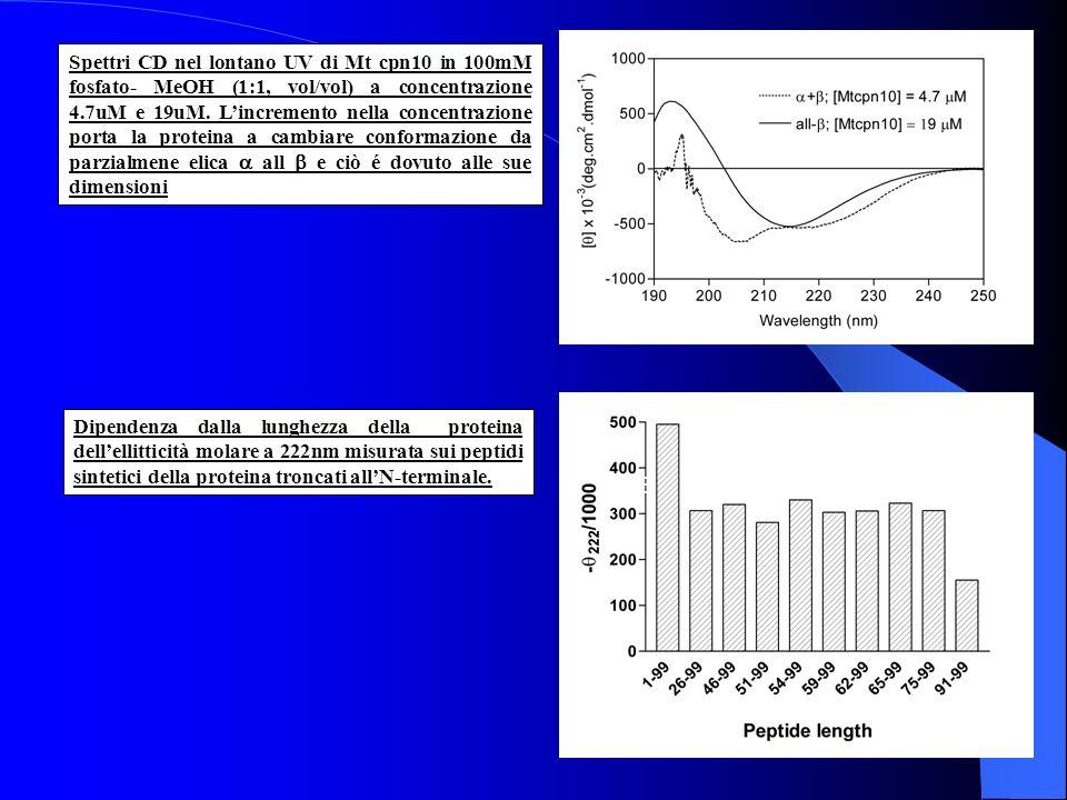 Spettri CD nel lontano UV di Mt cpn10 in 100mM fosfato- MeOH (1:1, vol/vol) a concentrazione 4.7uM e 19uM. L'incremento nella concentrazione porta la proteina a cambiare conformazione da parzialmene elica a all b e ciò é dovuto alle sue dimensioni
