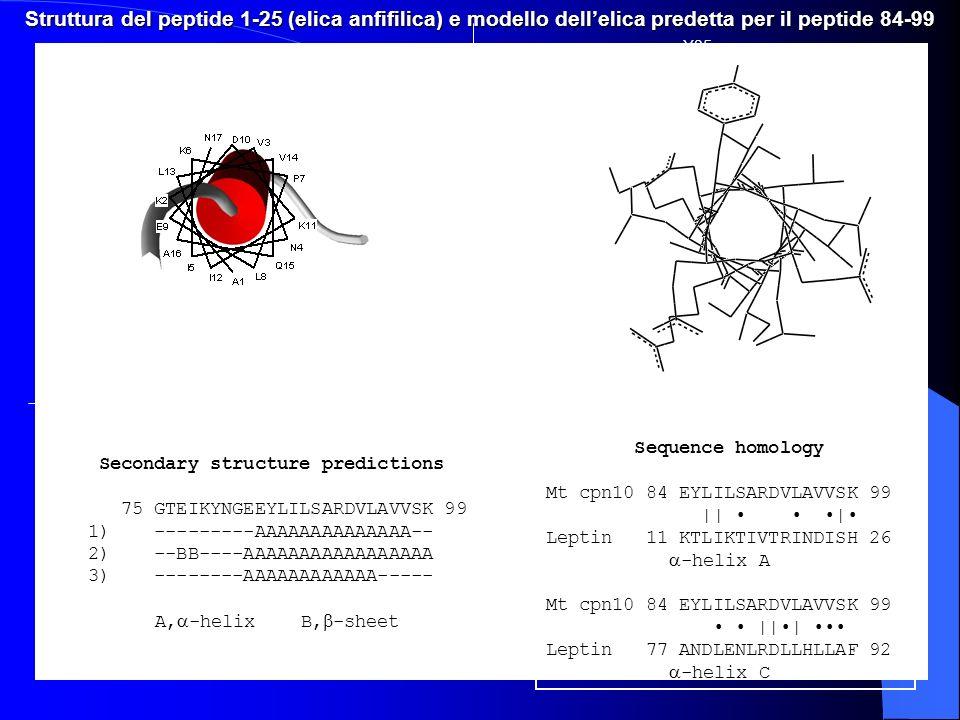 Struttura del peptide 1-25 (elica anfifilica) e modello dell'elica predetta per il peptide 84-99