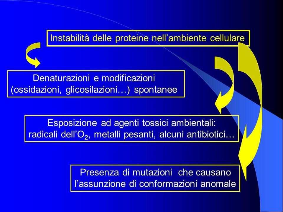 Instabilità delle proteine nell'ambiente cellulare