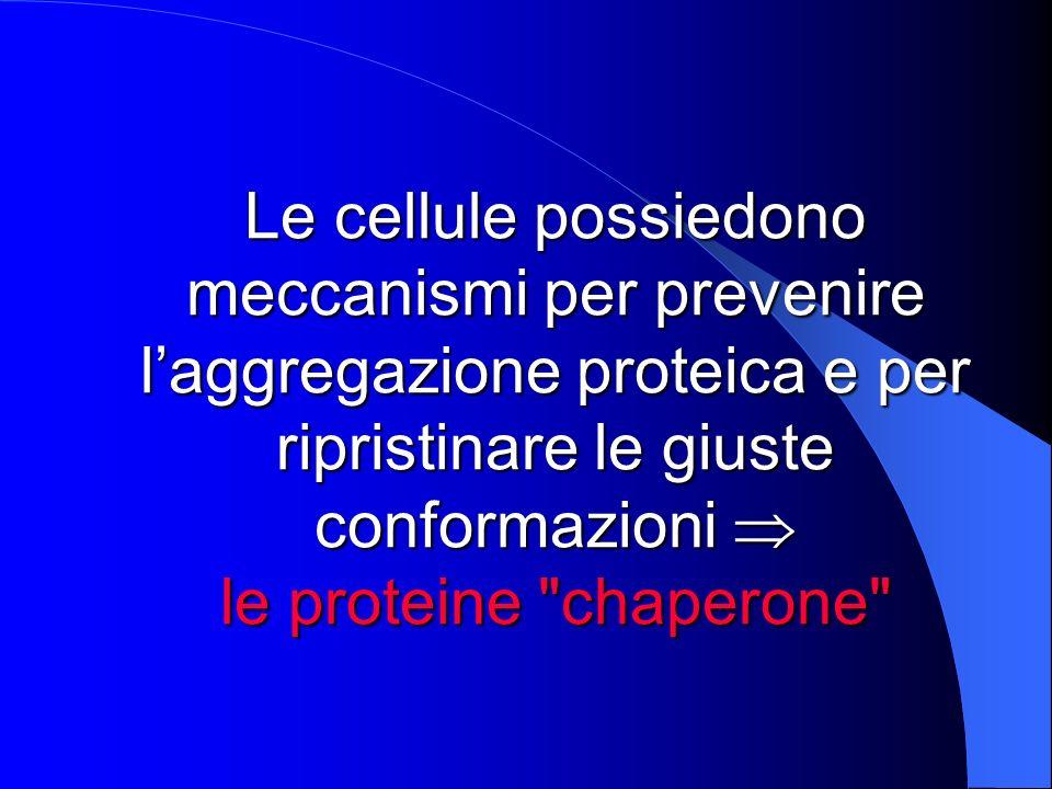 Le cellule possiedono meccanismi per prevenire l'aggregazione proteica e per ripristinare le giuste conformazioni  le proteine chaperone