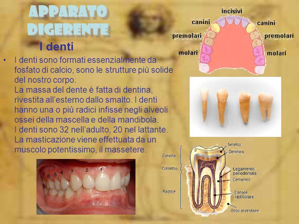 APPARATO DIGERENTE I denti