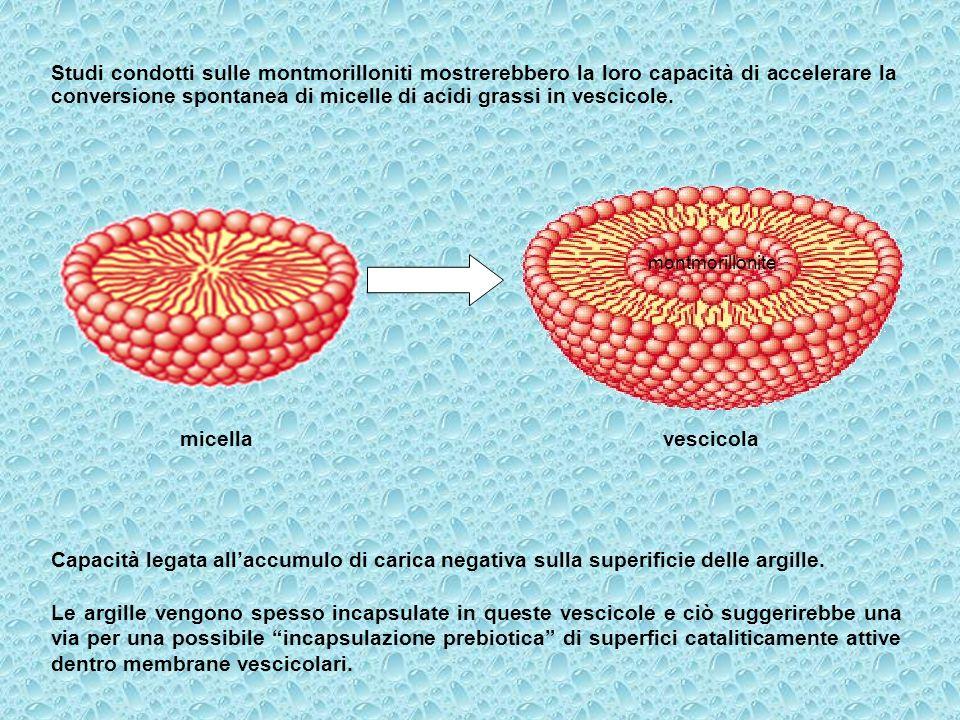 Studi condotti sulle montmorilloniti mostrerebbero la loro capacità di accelerare la conversione spontanea di micelle di acidi grassi in vescicole.