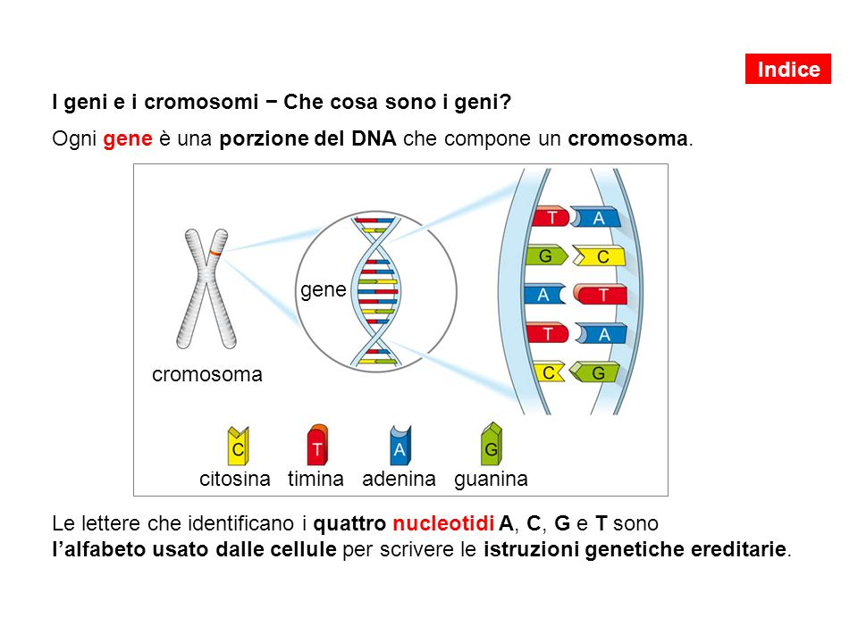 I geni e i cromosomi − Che cosa sono i geni