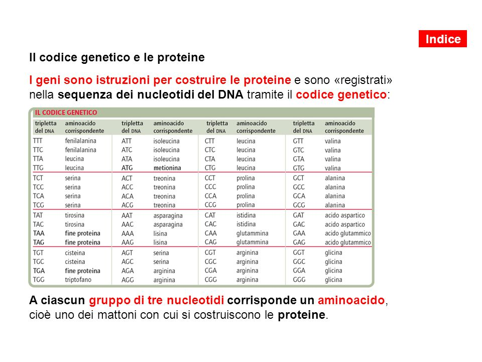 Il codice genetico e le proteine