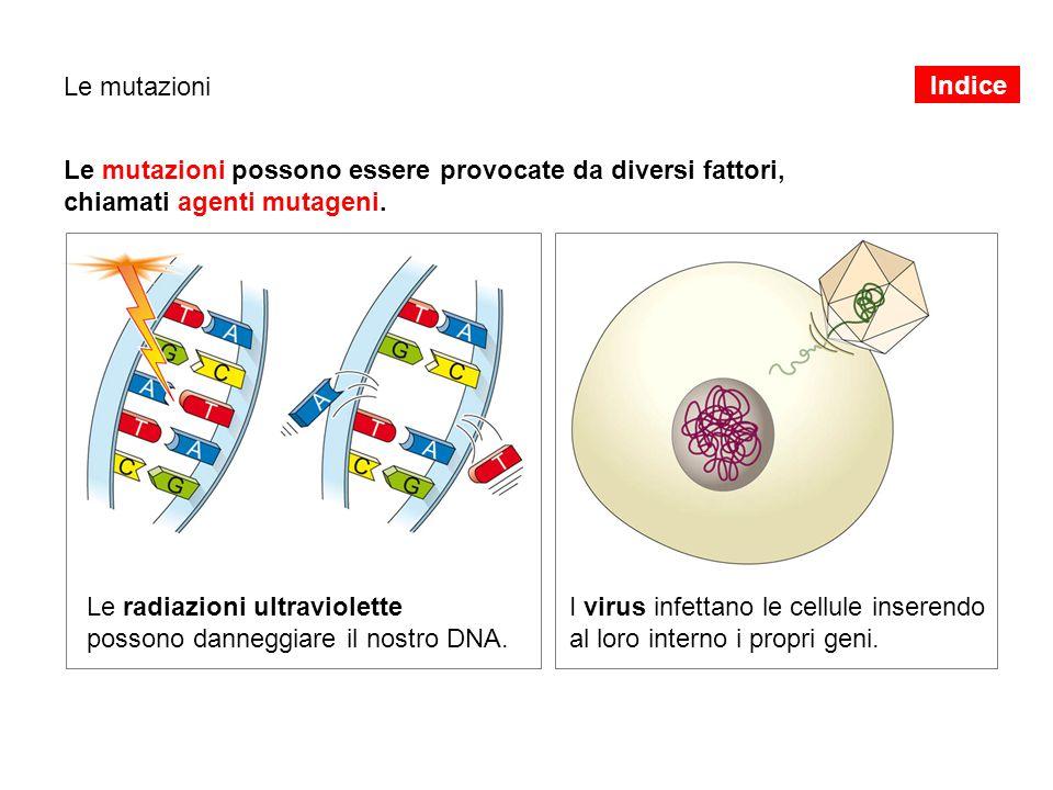 Le mutazioni possono essere provocate da diversi fattori,