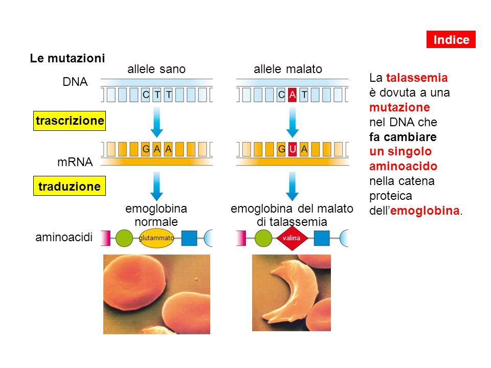emoglobina del malato di talassemia
