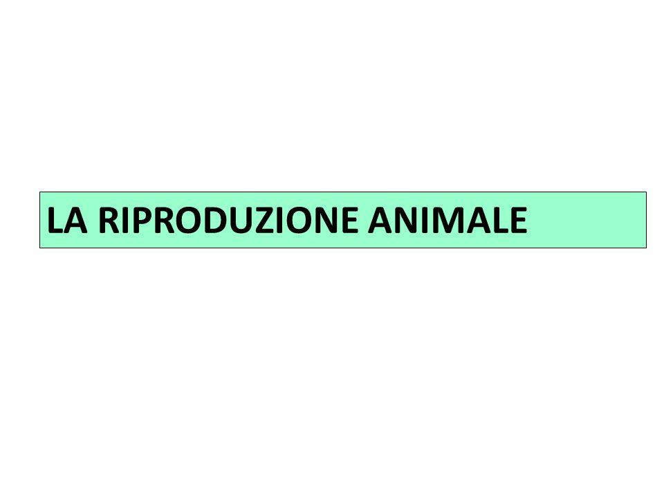LA RIPRODUZIONE ANIMALE