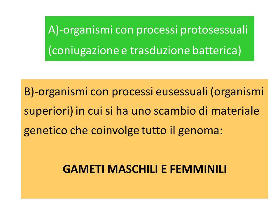 GAMETI MASCHILI E FEMMINILI