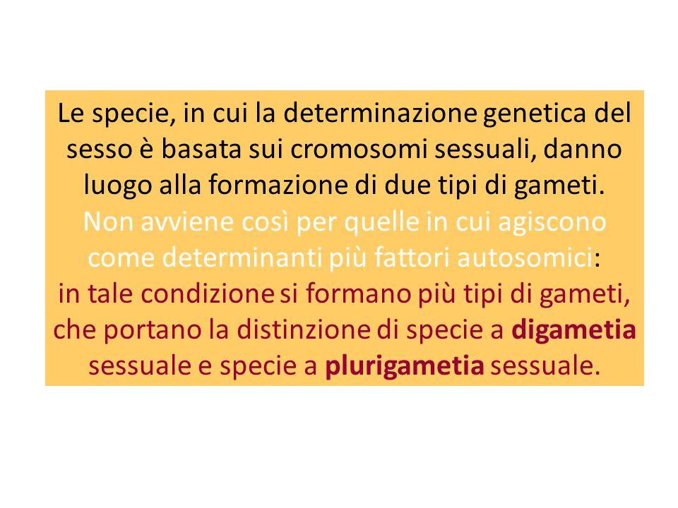 Le specie, in cui la determinazione genetica del sesso è basata sui cromosomi sessuali, danno luogo alla formazione di due tipi di gameti. Non avviene così per quelle in cui agiscono come determinanti più fattori autosomici: