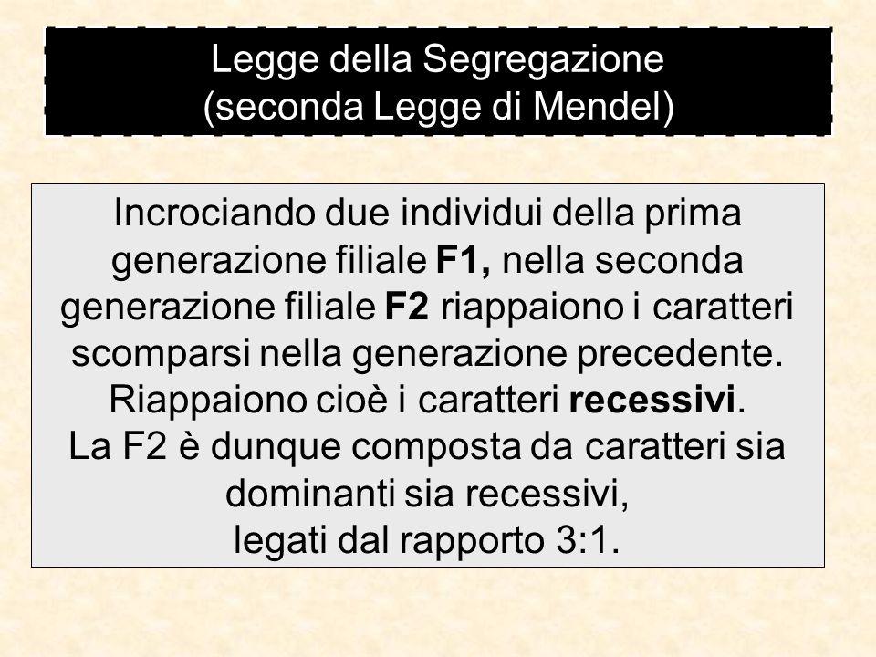 Legge della Segregazione (seconda Legge di Mendel)