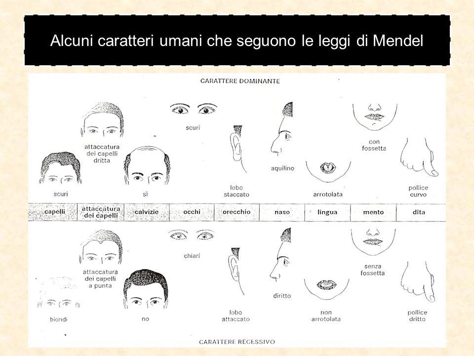 Alcuni caratteri umani che seguono le leggi di Mendel