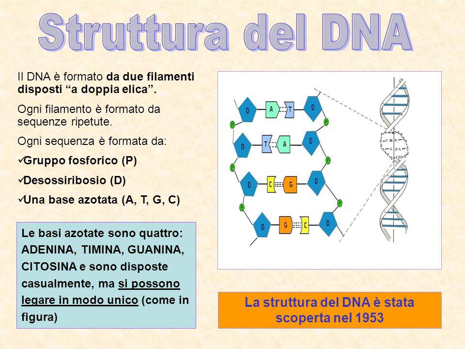 La struttura del DNA è stata scoperta nel 1953