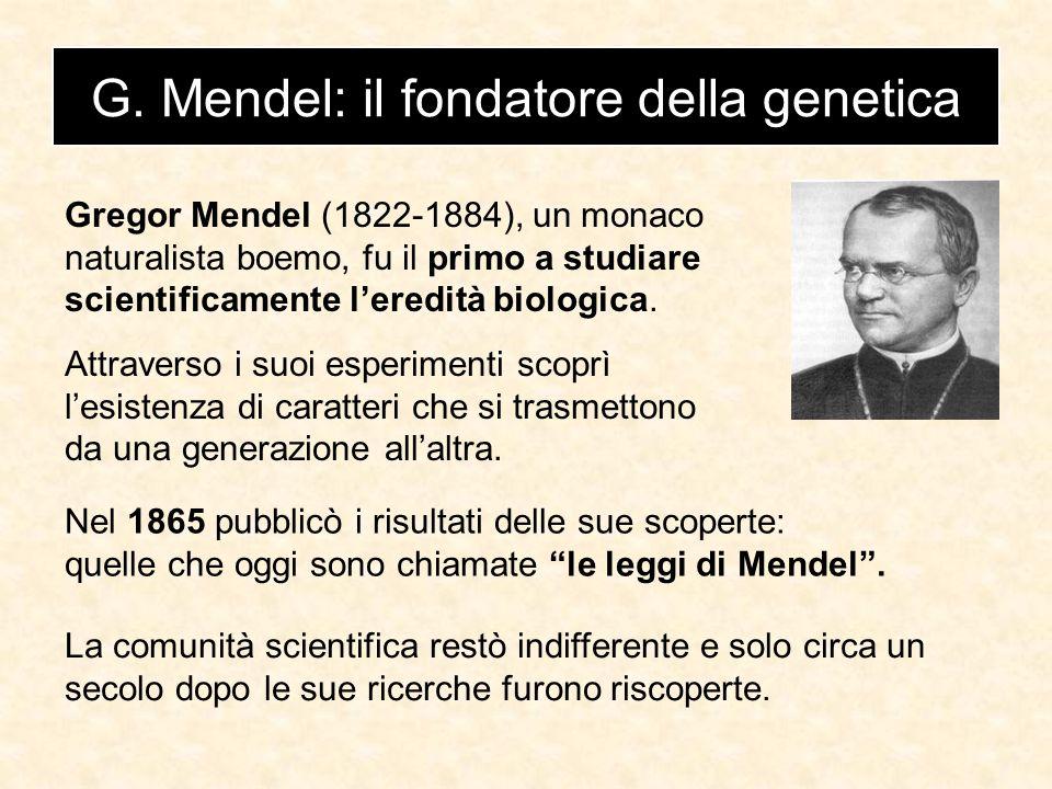 G. Mendel: il fondatore della genetica