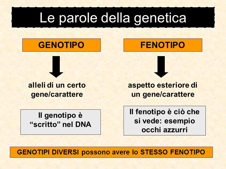 Le parole della genetica
