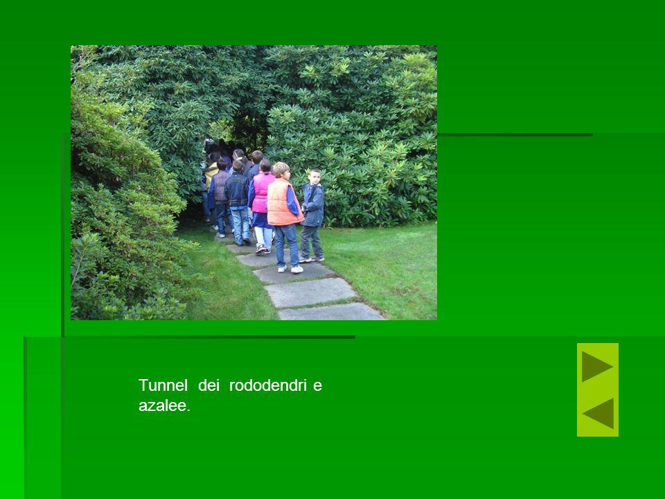 Tunnel dei rododendri e azalee.