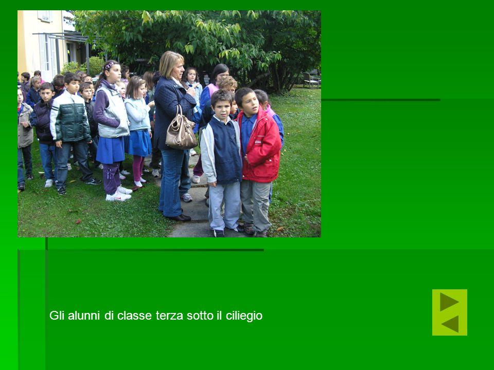 Gli alunni di classe terza sotto il ciliegio