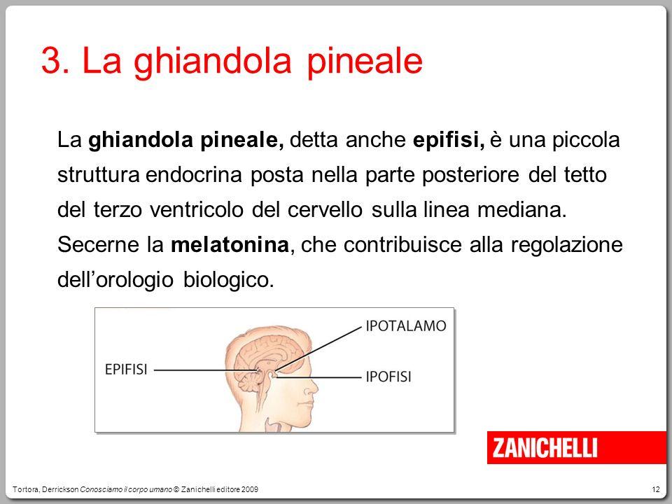 3. La ghiandola pineale