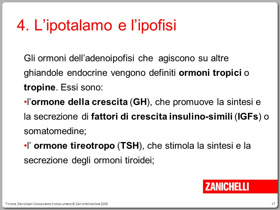 4. L'ipotalamo e l'ipofisi