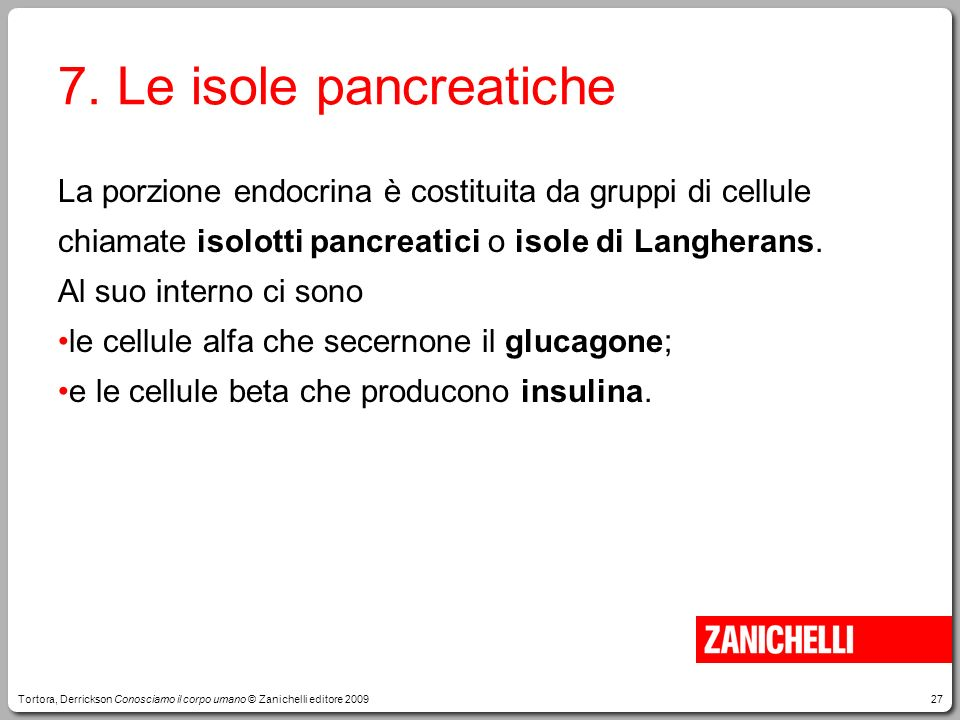 7. Le isole pancreatiche La porzione endocrina è costituita da gruppi di cellule chiamate isolotti pancreatici o isole di Langherans.